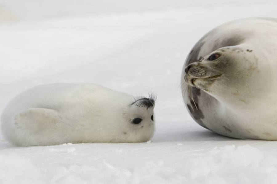 Arctic Animals 21 Incredible Creatures You Ll Only Find