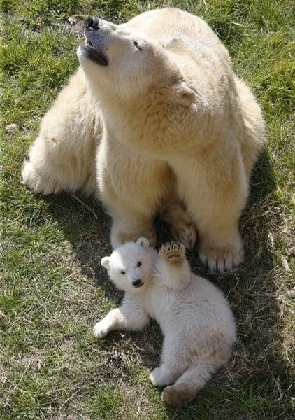 Mom Cub