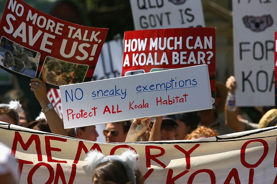 Save Koalas Rally