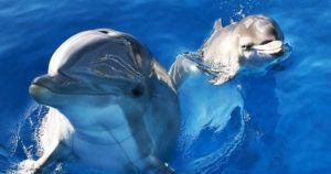Dolphins Have Conversations Like Humans Do, New Study Says