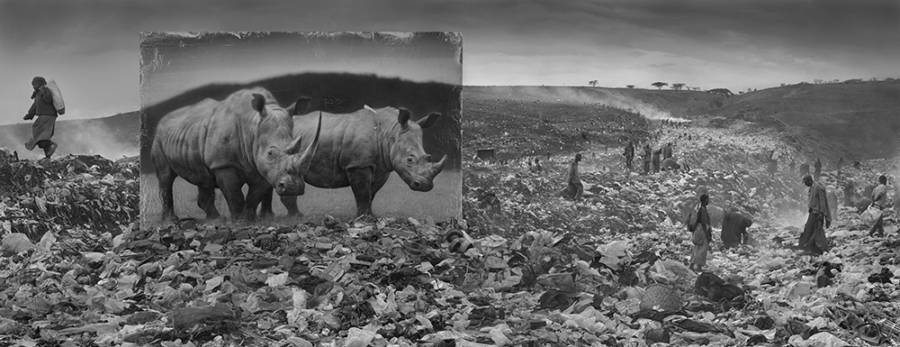 Wasteland With Rhinos 2015 4000px