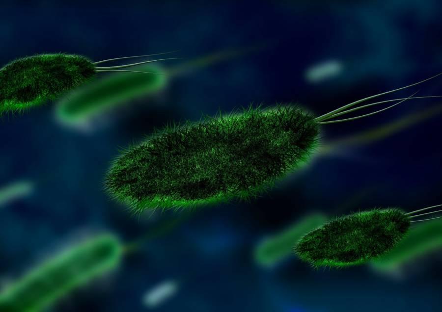 Bacteria 106583_1920