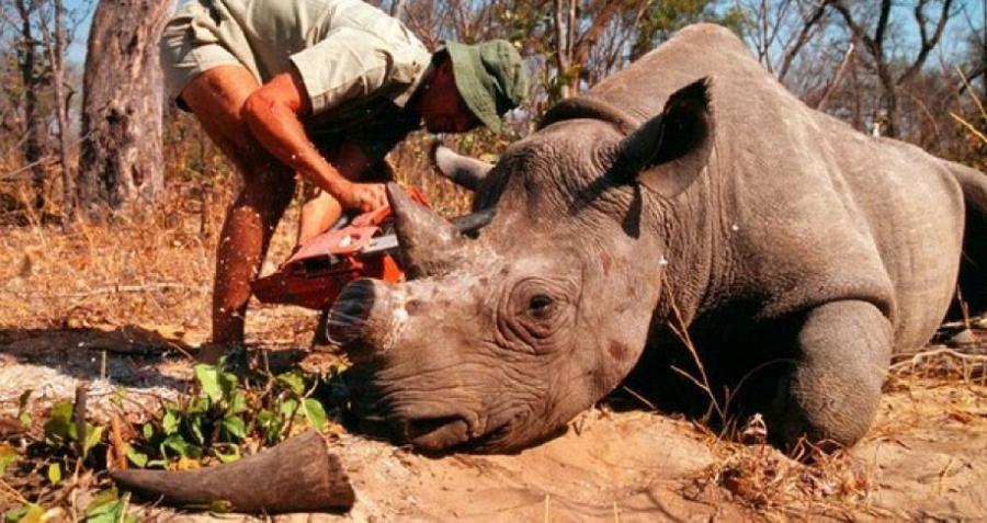 Big Game Dead Rhino