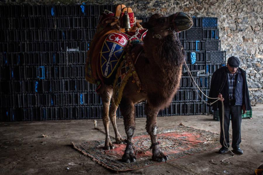 Camel Handler Rug