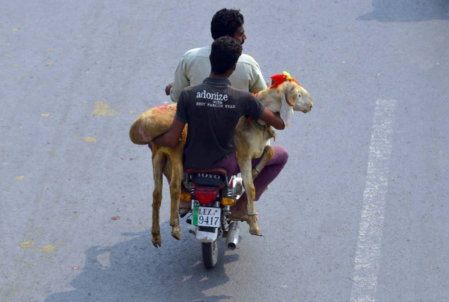 Carrying Animal