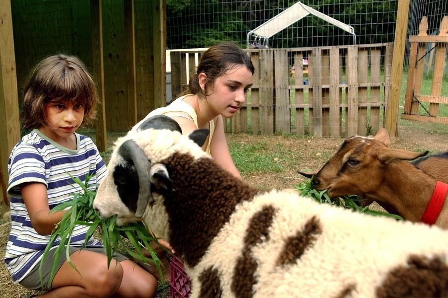 Children Goats