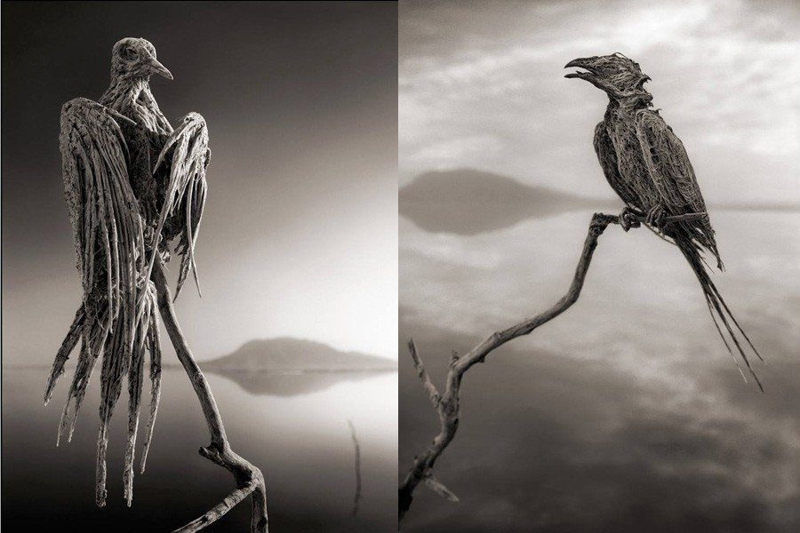 Lake Natron Eagle Swallow