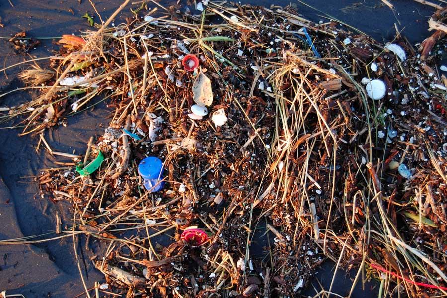 Plastic Beach Sf