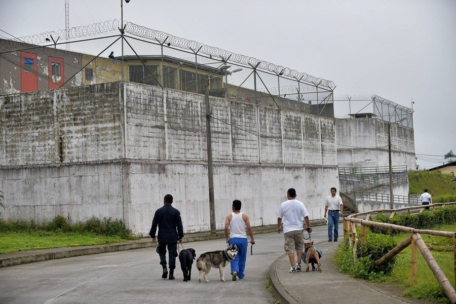 Prison Dogs Walking