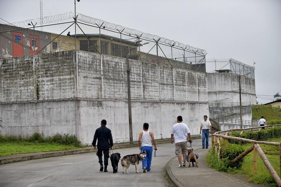 Prison Dogs Walking