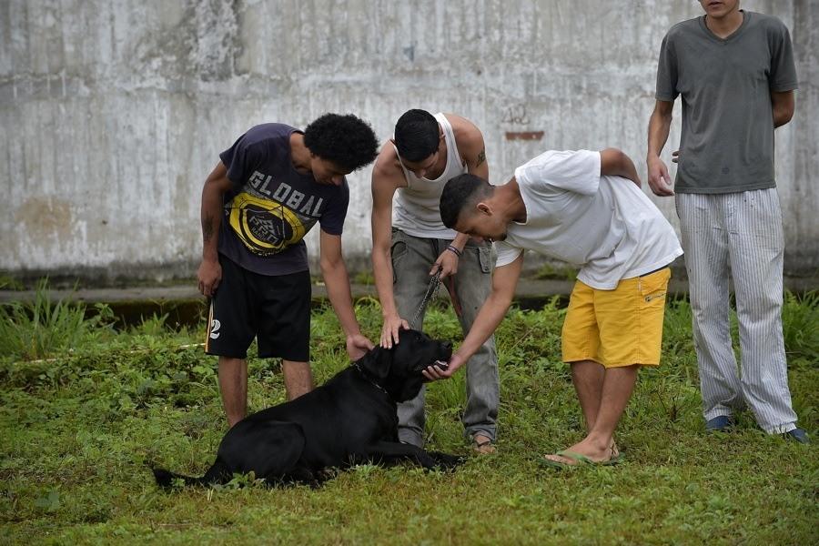 Prisoners Back Dog