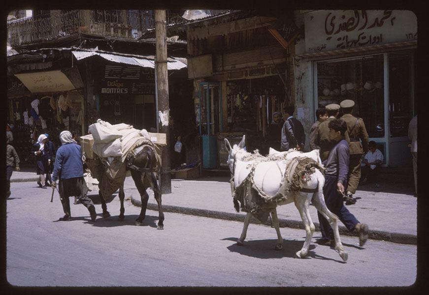 Syria Donkeys