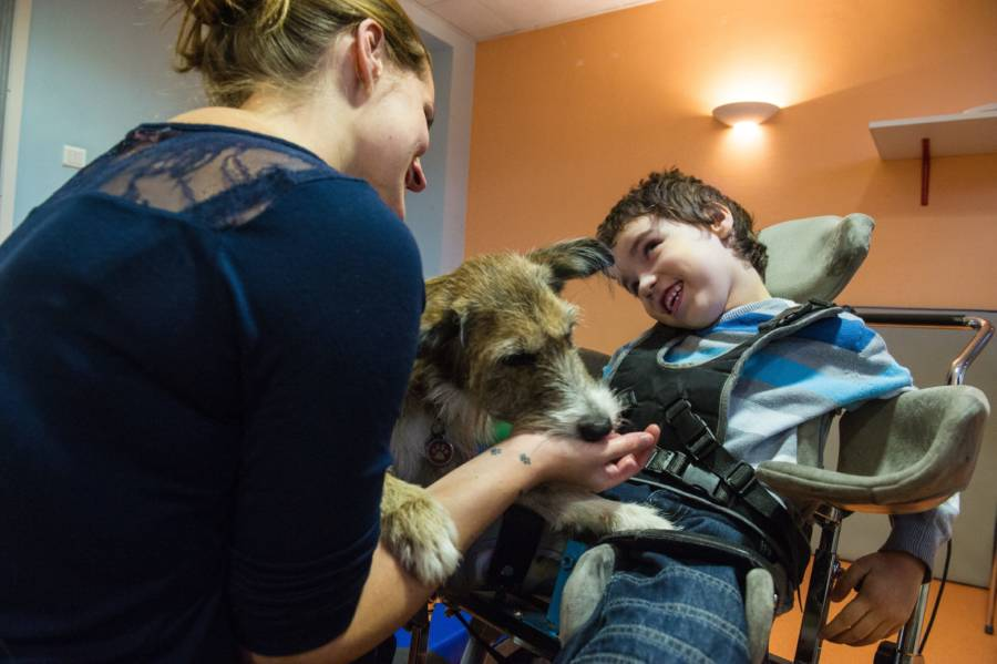 Therapy Animals: Photos And Facts That Explain Their Growing