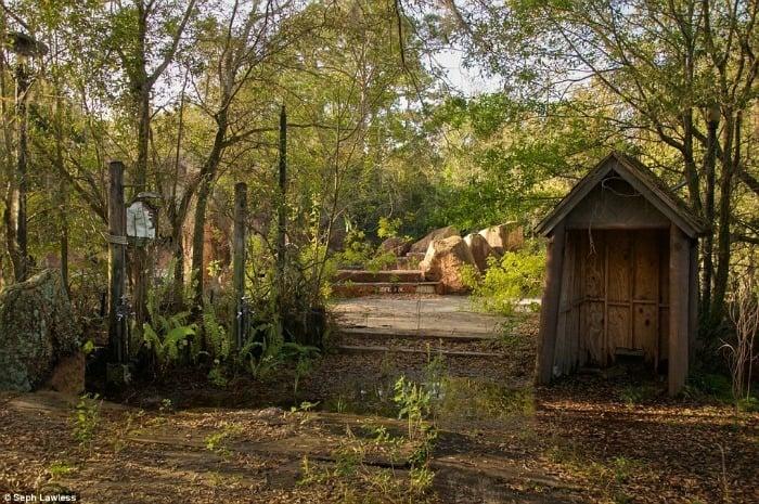 Abandoned Disneyland Trees