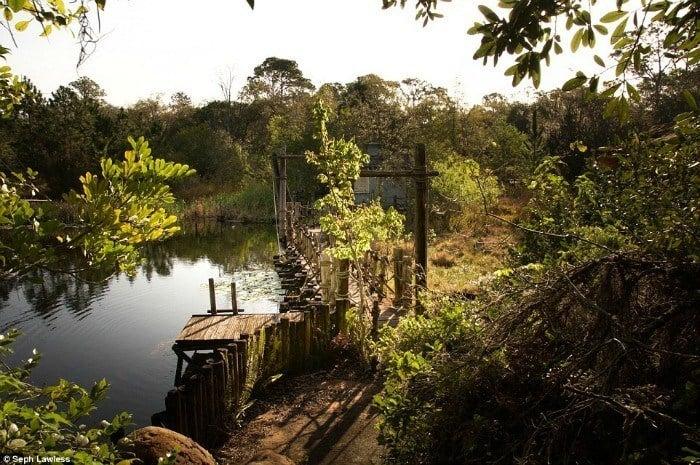 Bridge Water Woods
