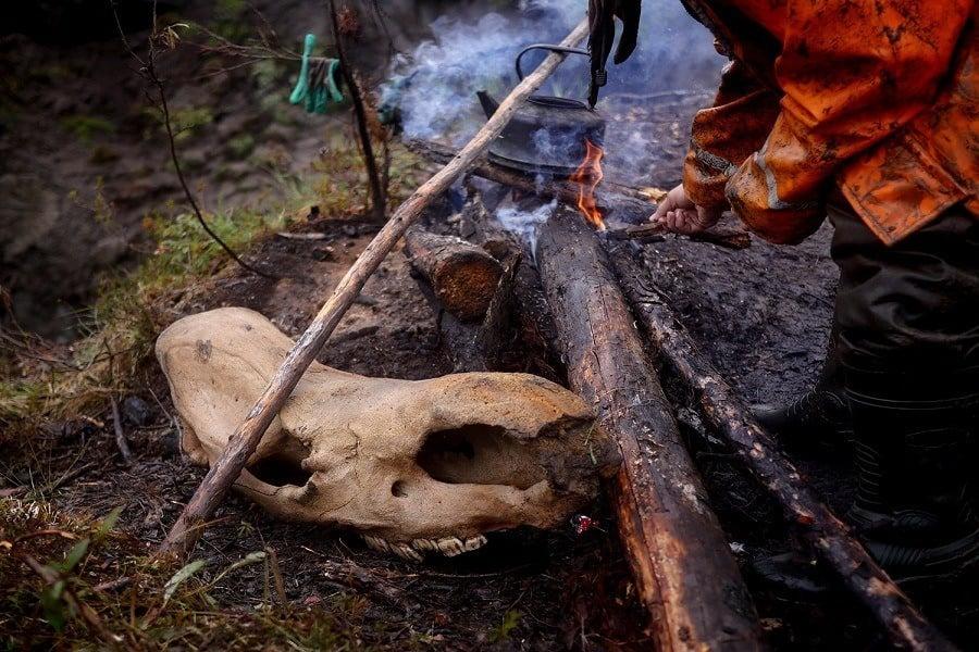 Campfire Skull