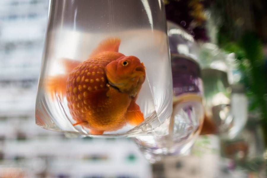 Watch How to Acclimate Your Fish to Your Aquarium Floating Method video