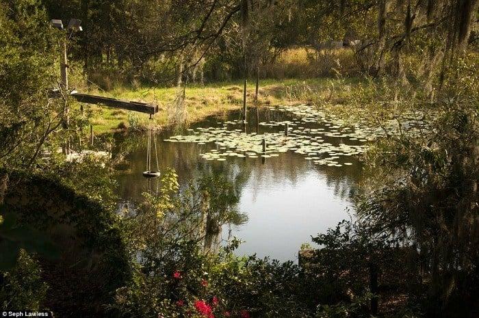 Lake Swings