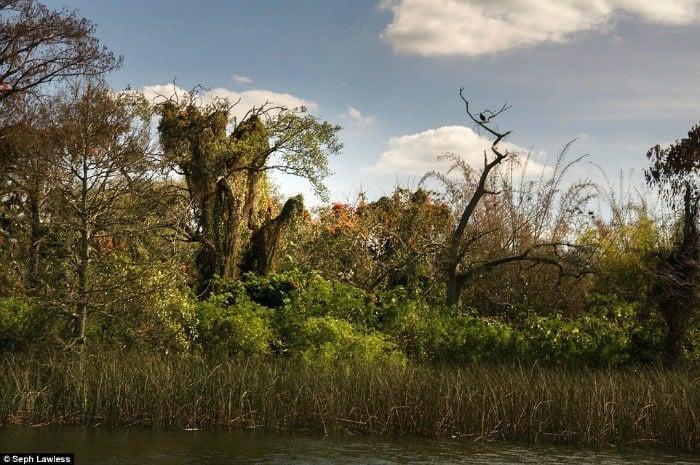 Landscape Trees Disney