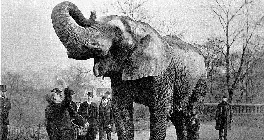 Man Waving Elephant Jumbo