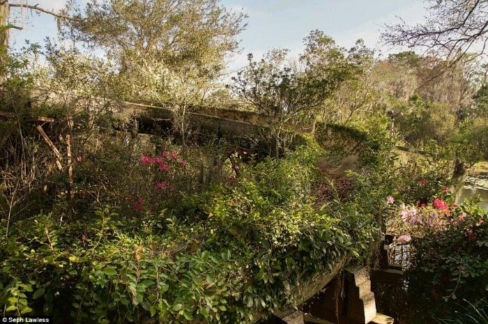 Overgrown Flume Flowers