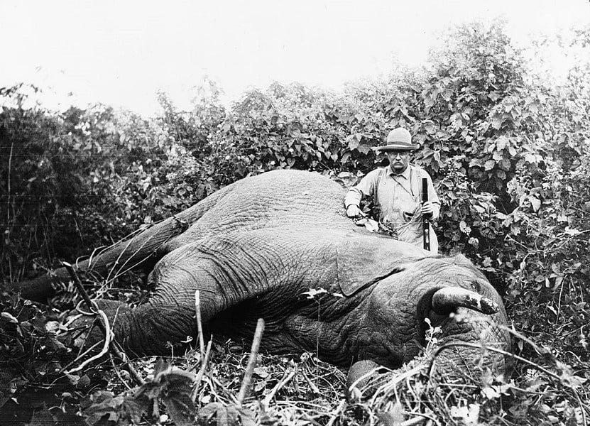 Roosevelt Elephant