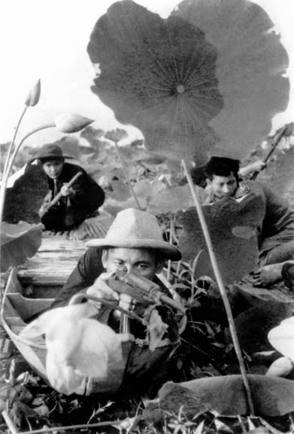Soldiers Lotus