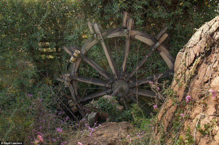 Waterwheel Overgrown