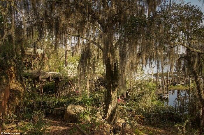 Willow Log Flume