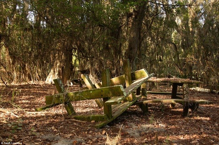 Woods Bench Abandoned