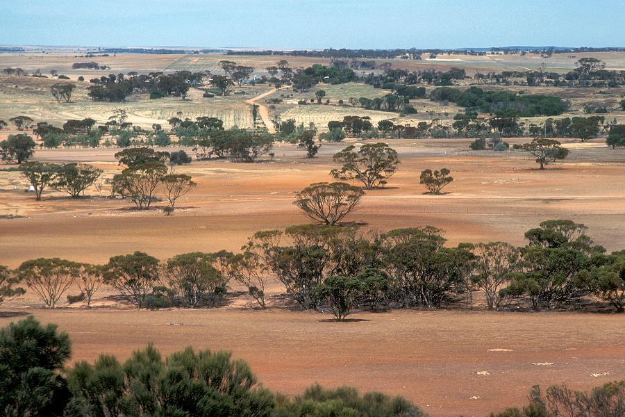 Aborigine Genocide Australian Farmland