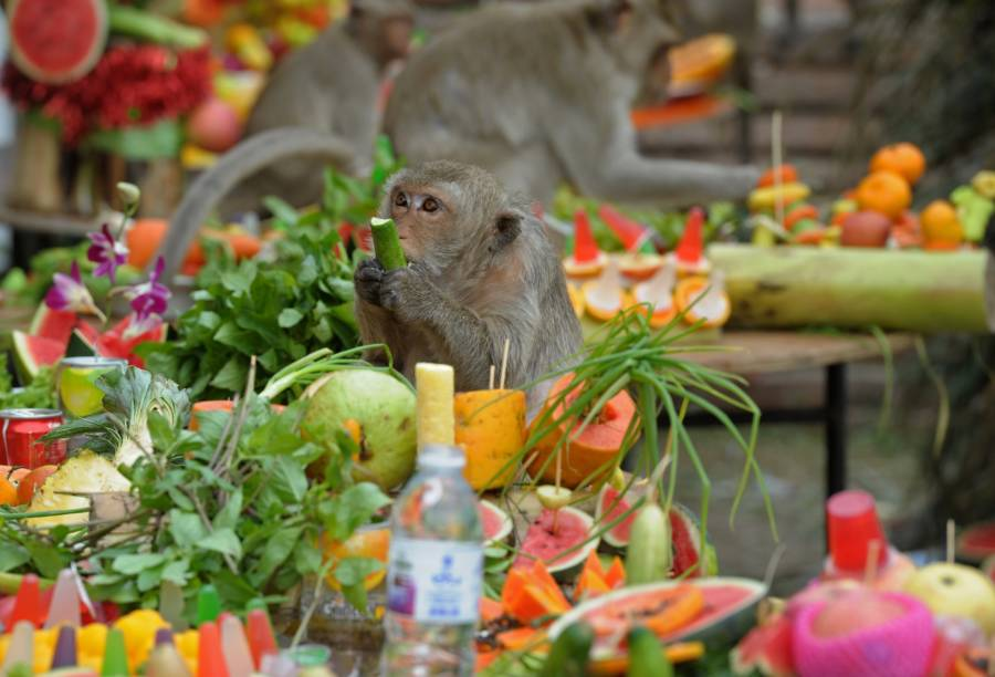 Fruit Monkey Festival