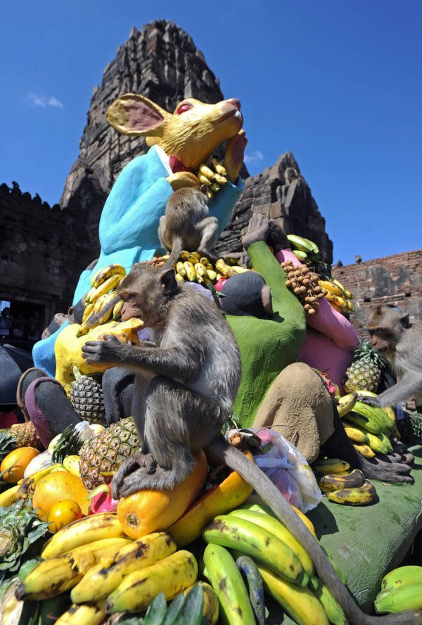 Giant Rabbit Monkey