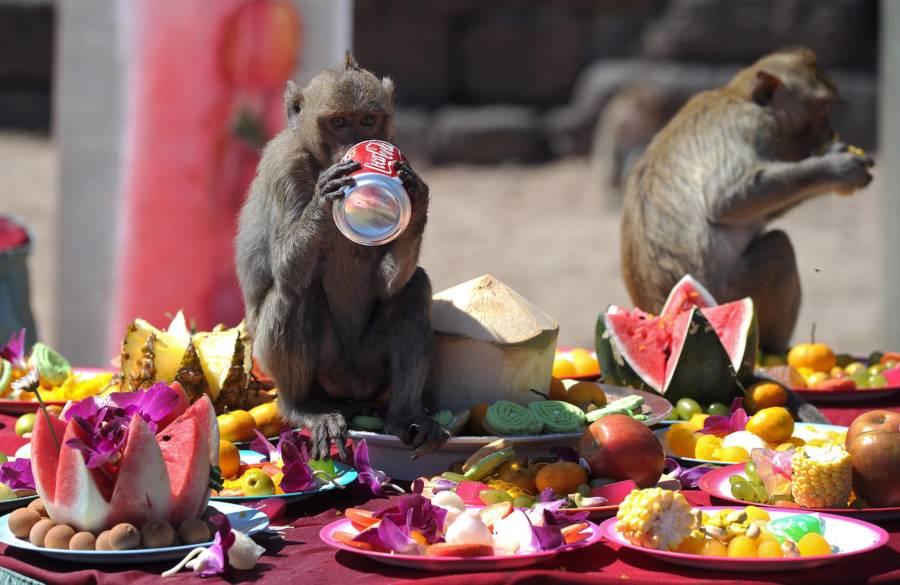 Monkey Festival Soda Can