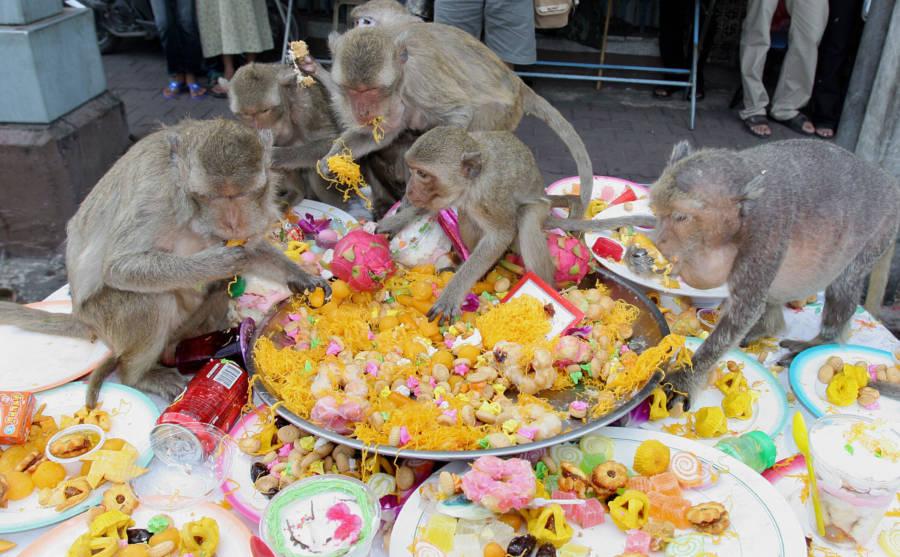 Monkey Paella