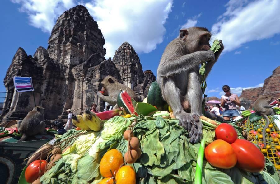 Monkey Vegetable Pill