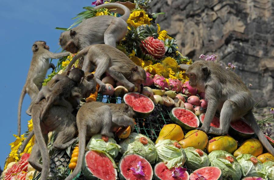 Monkey Watermelon Tower