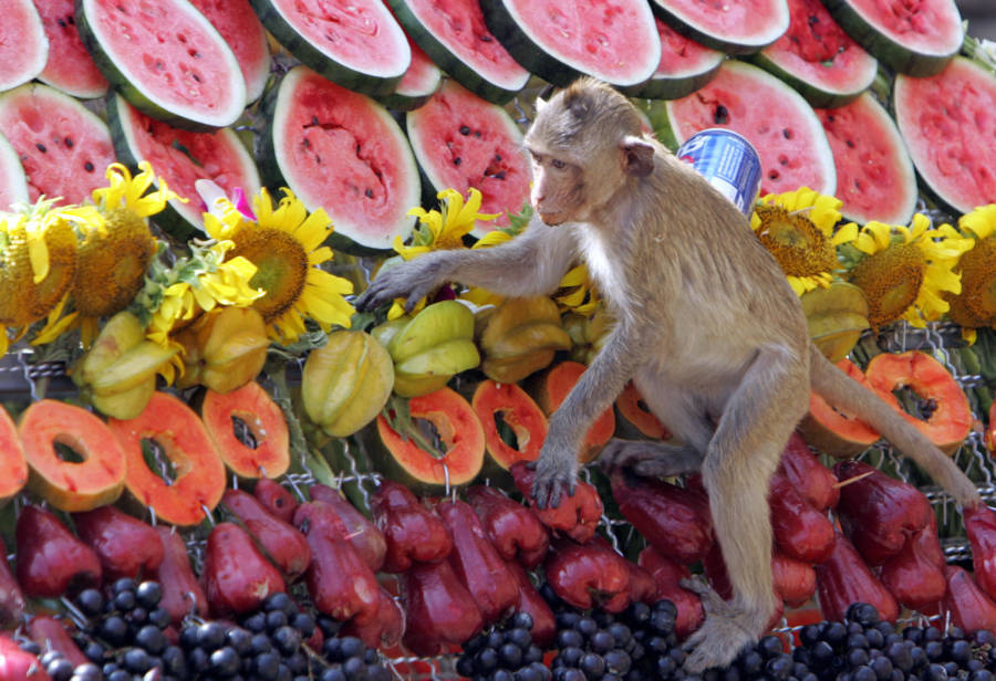 Monkey Watermelon