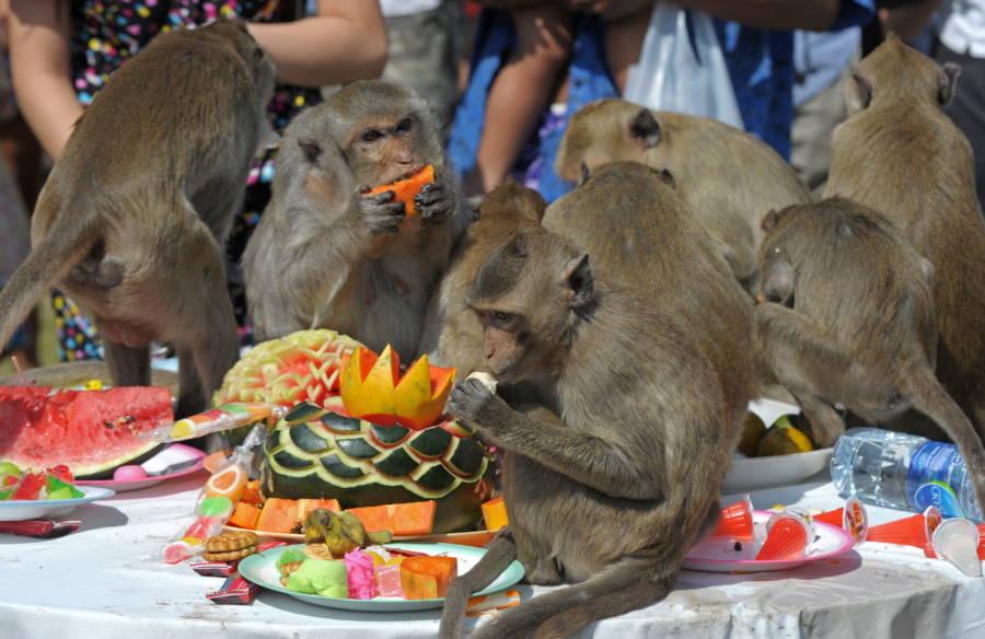 Monkeys Table