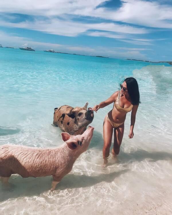 Pig Beach Influencer