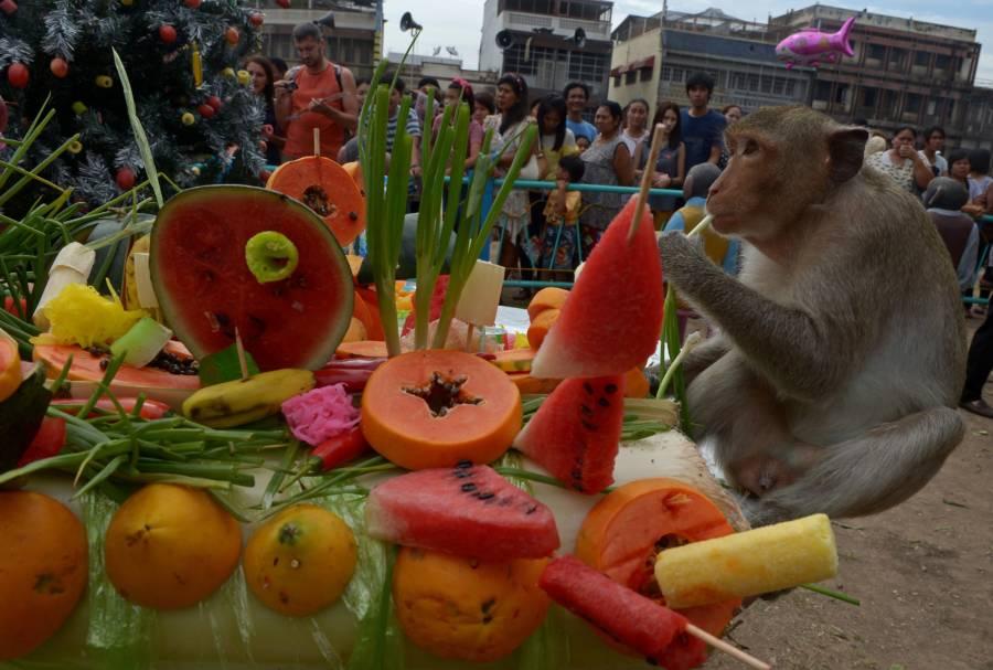 Watermelon Skewers Monkey