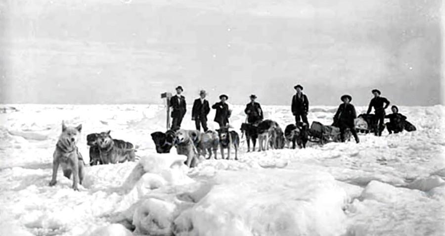 Dogs Sled In Alaska