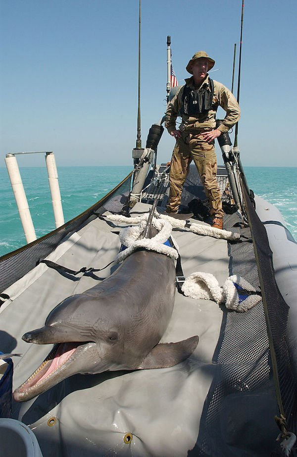 Dolphin Army Boat