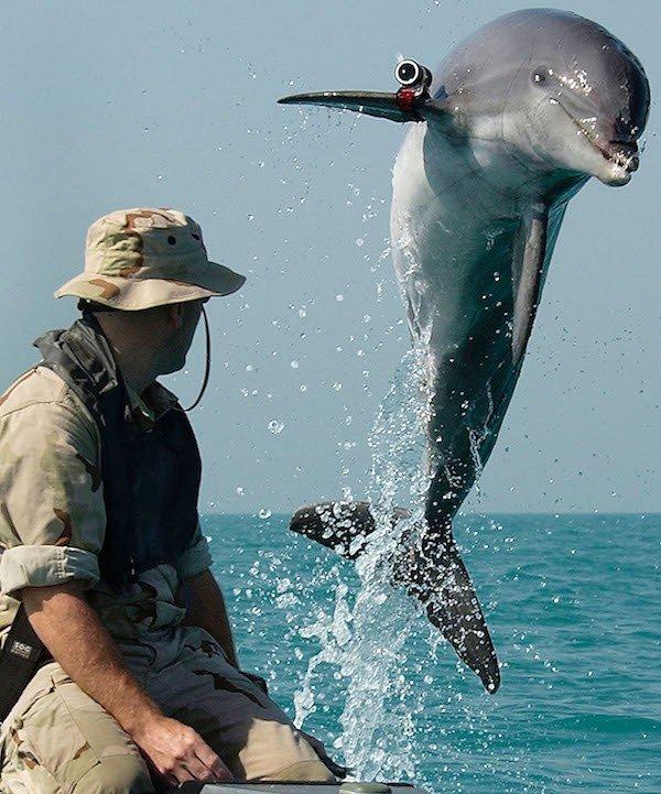 Dolphin Jump Army