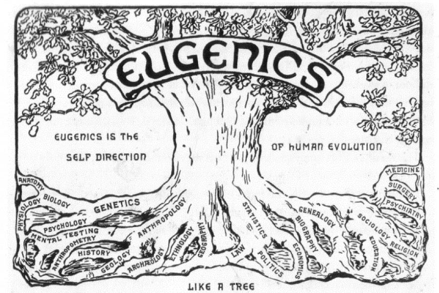 Eugenics Tree Illustration