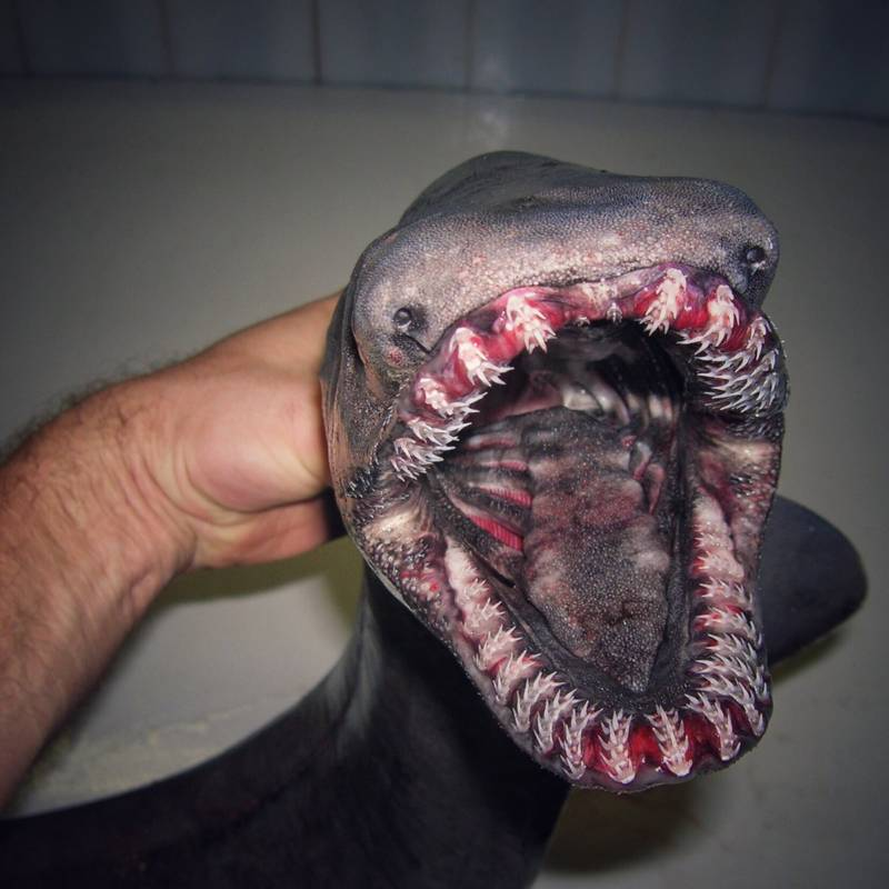Weird Thing Teeth