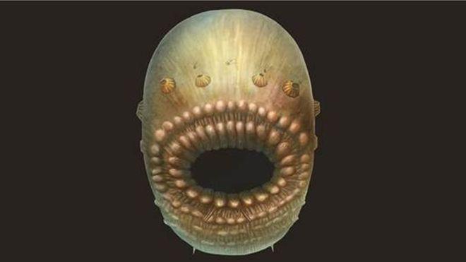 Earliest Ancestor Of Humans