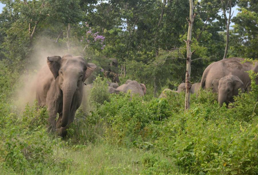 Elephant Herd Tramples A Poacher