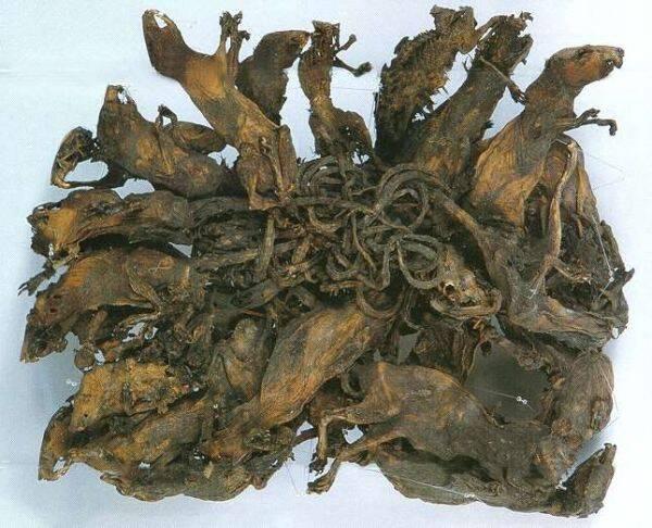 Petrified Tangle Of Rats