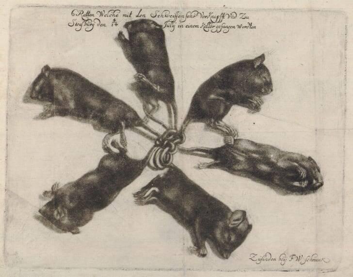 Rat King Illustration